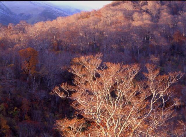 11月の月山